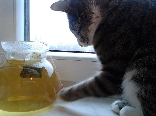 kot i herbata