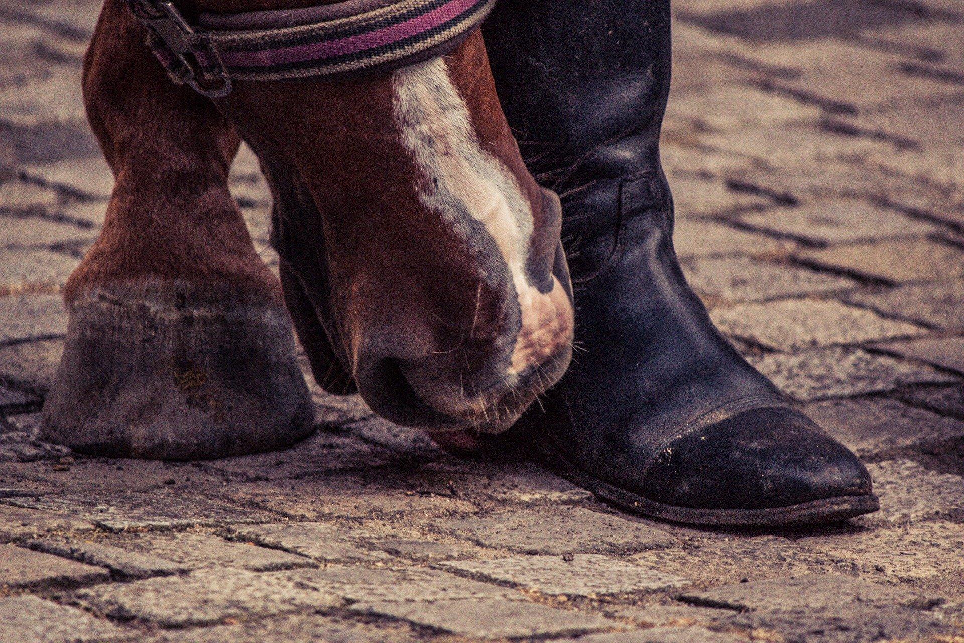 Jak chronić końskie nogi?