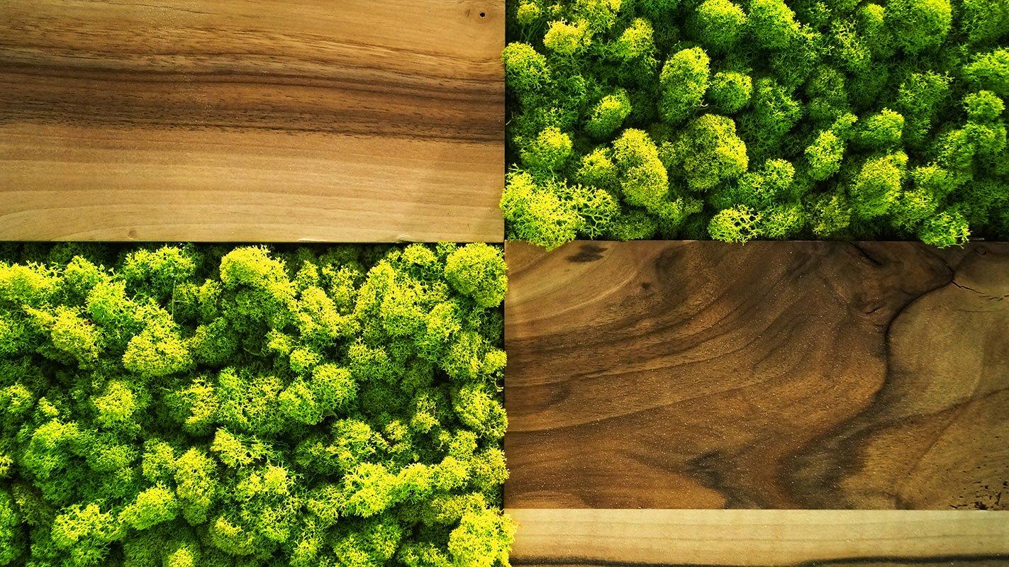 Stylowe obrazy z żywych roślin do wnętrz