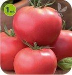 Pomidor szczepiony Fenda