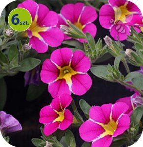 Calita (Million bells) Pink Star 6 sztuk