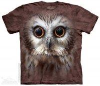 Saw Whet Owl - The Mountain