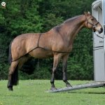 Zestaw do wprowadzania konia do przyczepy - WALDHAUSEN