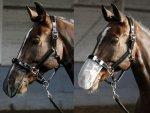Maska siatkowa na nos do jazdy - Harry's Horse