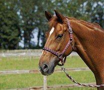 Kantar CARRY - Busse - pony