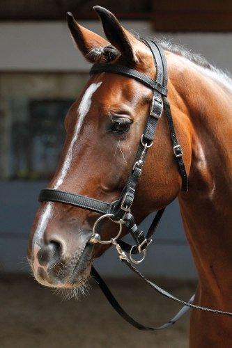 Ogłowie rajdowe / kantaroogłowie  - HARRY'S HORSE