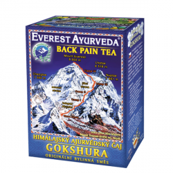 Gokshura - ból pleców i kręgosłupa