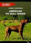 American pit bull terier