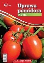 Uprawa pomidora w polu