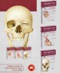 Atlas anatomii człowieka PROMETEUSZ Tom 1-3 Komplet