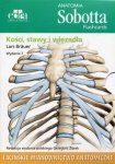 Anatomia Sobotta Flashcards Kości stawy i więzadła Łacińskie mianownictwo anatomiczne