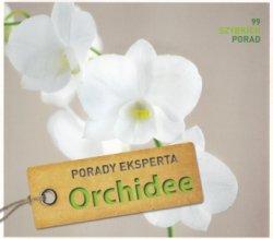 Orchidee Porady eksperta Folko Kullmann