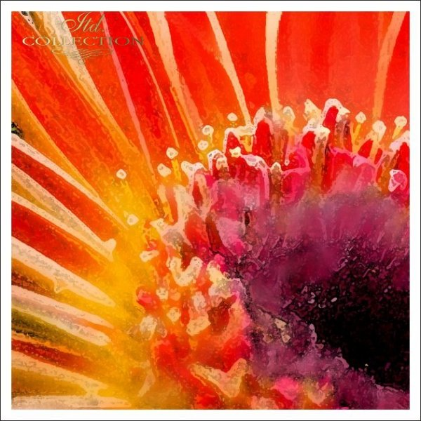Invitations / Wedding Invitation 01726_24_gerbera