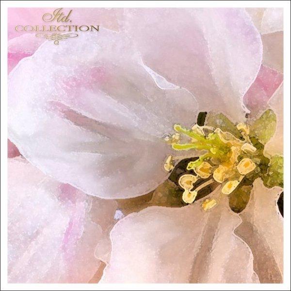 Invitations / Wedding Invitation 01731_46_apple_blossom