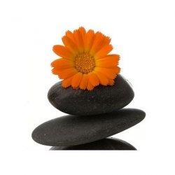 Spa - kamień i stokrotka - reprodukcja