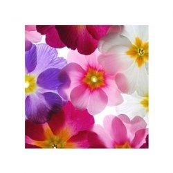 Przeźroczyste Kwiaty - reprodukcja