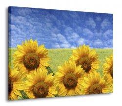 Obraz na płótnie - Słoneczniki - 120x90 cm