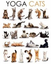 Yoga Cats - plakat