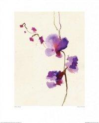 Orchidea, Storczyk - reprodukcja