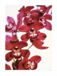 Orchidea - reprodukcja