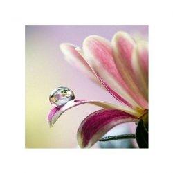 Kwiat - reprodukcja