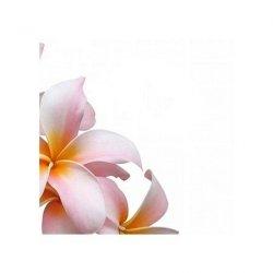 Kwiat frangipani - reprodukcja