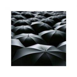 Morze parasolek - reprodukcja