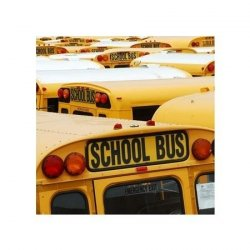 New York, School Bus - reprodukcja