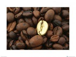 Złote Ziarno Kawy - metamorfoza - reprodukcja