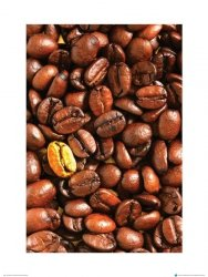 Złote Ziarno Kawy - metamorfoza II - reprodukcja