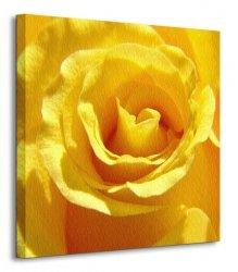 Róża - Obraz na płótnie