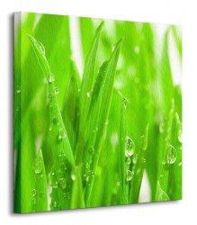 Świeża zieleń - Obraz na płótnie
