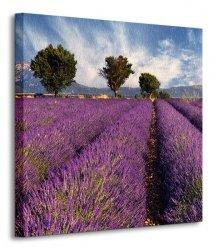 Lavender field in Provence, France - Obraz na płótnie