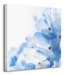Hydrangea flowers background - Obraz na płótnie