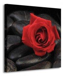 Róża na kamieniach - Obraz na płótnie