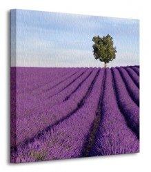 Francja, samotne drzewo - Obraz na płótnie