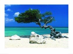 Plaża, Wyjątkowe drzewo - reprodukcja