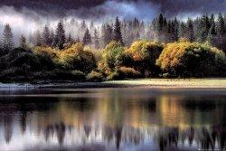 Las jesienią - plakat