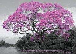 Kwitnące Drzewo - plakat