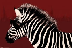 It's a WildLife - Zebra - plakat