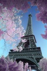 Paryż Wieżą Eiffel - David Clapp - plakat