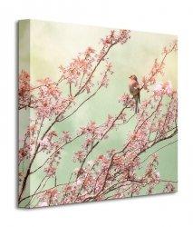 Obraz na płótnie - Chaffinch with Blossom - 40x40 cm
