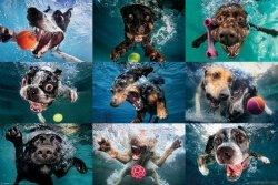 Podwodne Psy - plakat