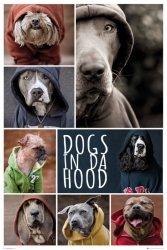Psy w bluzach z kapturem - plakat