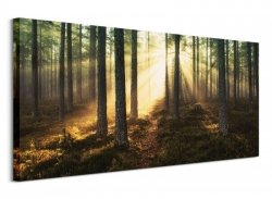 Sunlight Through Trees - Obraz na płótnie