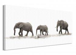 The Elephants - Obraz na płótnie