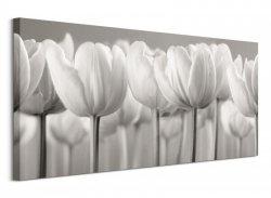 Obraz na płótnie - Białe Tulipany - White Tulips