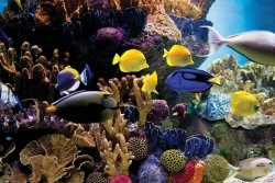 Rafa Koralowa Ryby i Korale - plakat