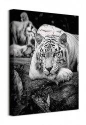 Tiger Stare - Obraz na płótnie