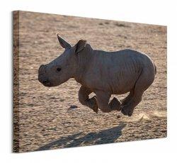 Pete Seaward (Rhino Run) - Obraz na płótnie